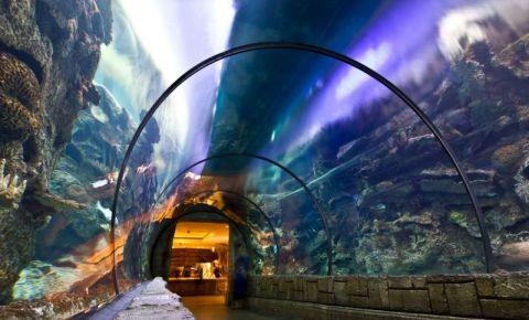 Aquariumul din Las Vegas
