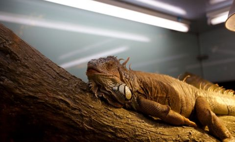 Acvariul si Gradina Zoologica din Dubai