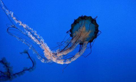 Aquariumul din Baltimore