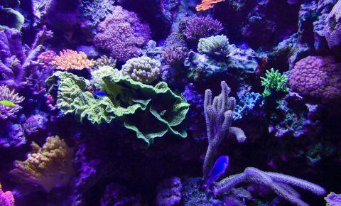 Aquariumul Roundhouse din Los Angeles