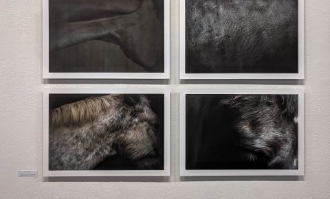 Galeria de Arta Fotografica din Belfast