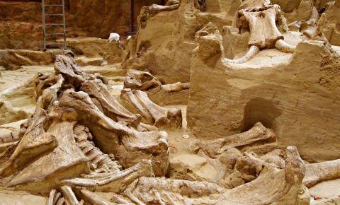 Centrul Mamutilor din Black Hills