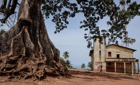 Copacul de Bumbac din Freetown