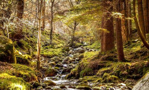 Pestera Patul Sfantului Kevin din Glendalough