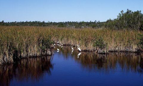 Golful Iadului din Everglades