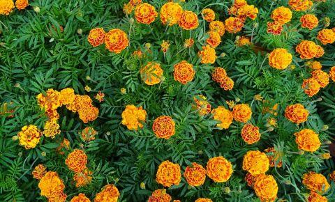 Gradina Botanica din Calcutta