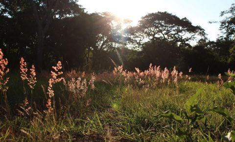 Gradina Botanica din Harare