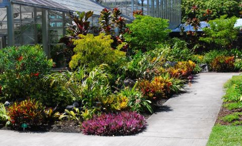 Gradina Botanica din Honolulu