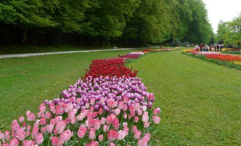 Gradina Botanica din Ljubljana