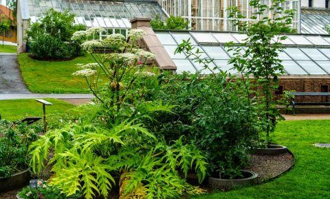Gradina Botanica din Oslo