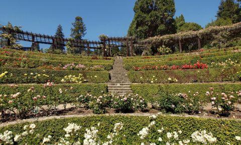 Gradina Trandafirilor din Berkeley