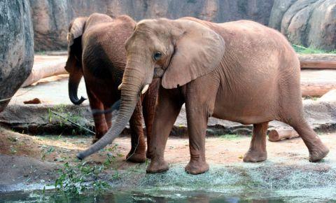 Gradina Zoologica din Atlanta