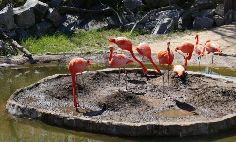 Gradina Zoologica din Baltimore