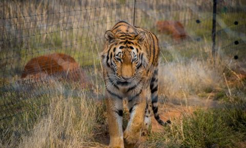 Gradina Zoologica din Bloemfontein
