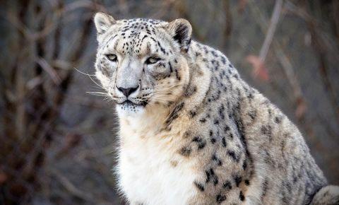 Gradina Zoologica din Cincinnati