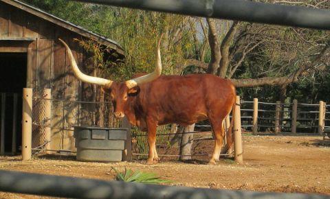 Gradina Zoologica din Houston