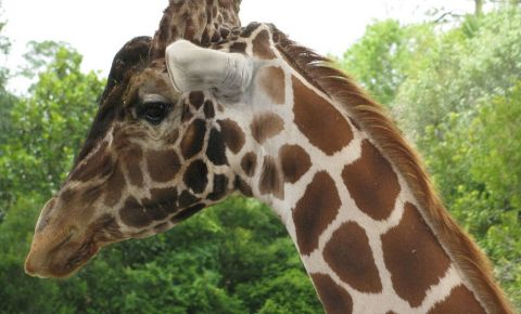 Gradina Zoologica din Jacksonville