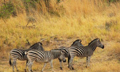 Gradina Zoologica din Johannesburg