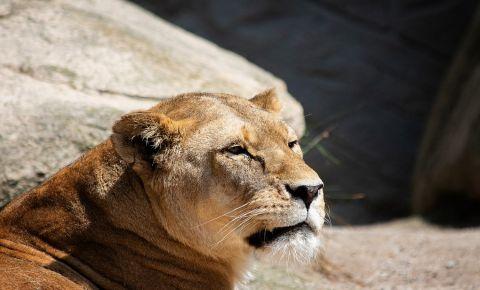 Gradina Zoologica din Kosice