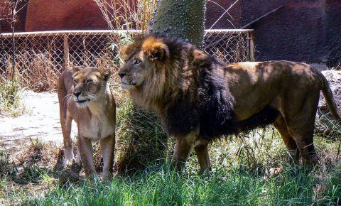 Gradina Zoologica din Los Angeles