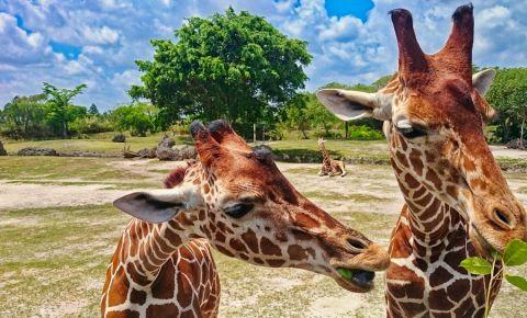 Gradina Zoologica din Miami