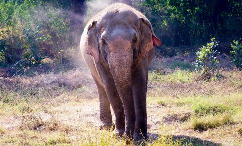 Gradina Zoologica din New Delhi