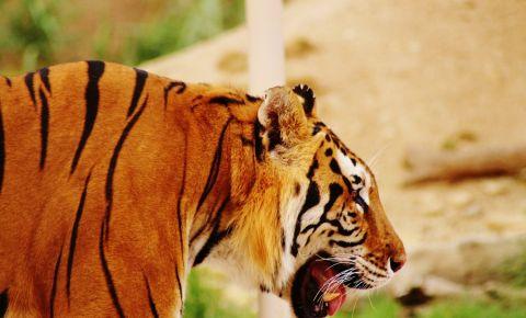 Gradina Zoologica din Riyadh