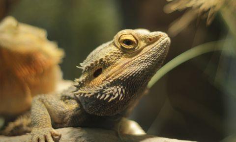 Gradina Zoologica din Tucson
