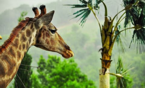 Gradina Zoologica din Yalta