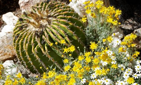 Gradinile Botanice din Tucson