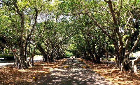 Gradinile Pinecrest din Miami