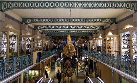 Muzeul de Istorie Naturala din Lille