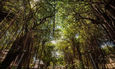 Parcul Company Gardens din Port Louis