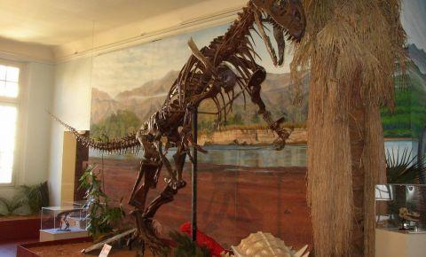 Muzeul de Istorie Naturala din Aix En Provence