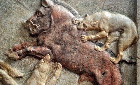 Muzeul de Arheologie din Canakkale