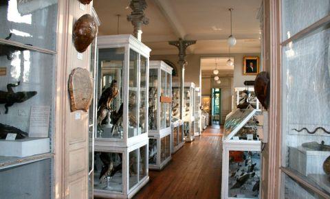 Muzeul de Istorie Naturala din Bordeaux