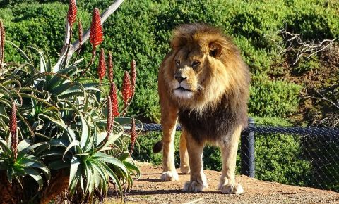 Parcul African Safari Zoo din Toulouse