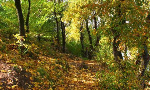 Parcul Taras Shevchenko din Dnipropetrovsk