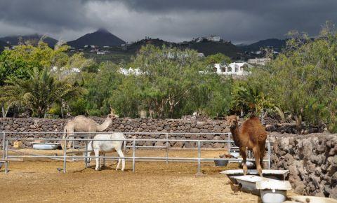 Parcul Tematic Camel din Tenerife