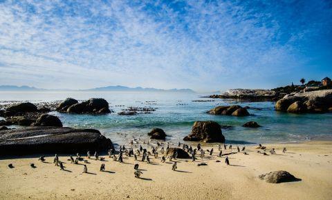 Plaja Boulders Beach din Cape Town