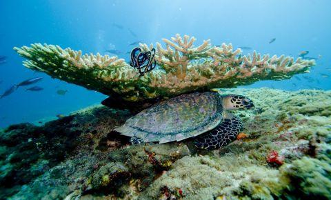Reciful Banana Reef din Male