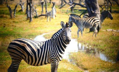 Rezervatia Game Gaborone
