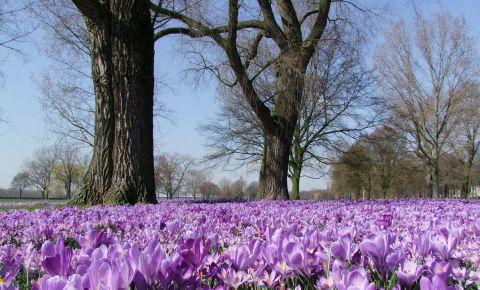 Parcul Rheinpark din Dusseldorf