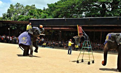 Satul Elefantilor din Pattaya