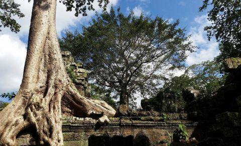 Templul Ta Prohm din Siem Reap