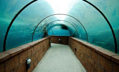 Tunelul Predator Lagoon din Nassau