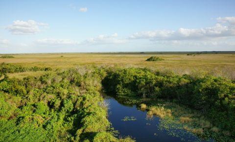 Valea Rechinilor din Everglades