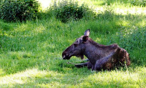 Gradina Zoologica Barnens din Goteborg