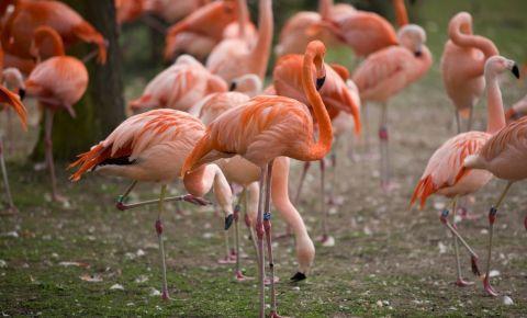 Gradina Zoologica din Koln