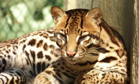 Gradina Zoologica din Windhoek